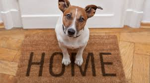 Let US Help You Find A New, Dog (or Kitty) Friendly Home!